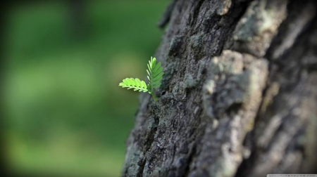 New Life Forests Nature Background Wallpapers On Desktop