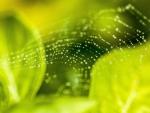 Summer Spider Web