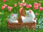 kittens in a tulip garden