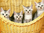 4 in a basket