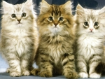 3 cuties