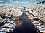 marina lined by white trees