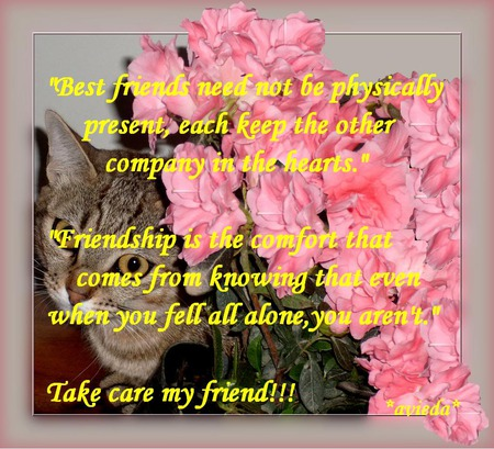 Take Care Friend Flowers Nature Background Wallpapers On Desktop