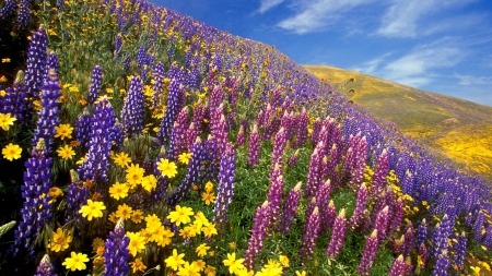 beautiful wildflowers on hillside in spring - hills, slopes, flowers, colors, spring