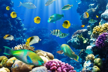 ♥Underwater♥ - fish, ocean, underwater, tropical, coral, reef