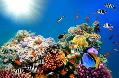 ♥Underwater♥ - underwater, reef, fish, ocean, coral, tropical