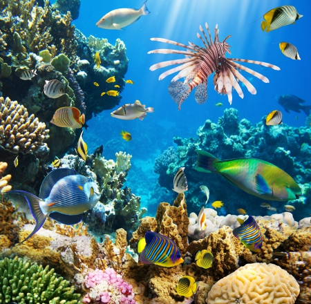 ♥Underwater♥ - ocean, fishes, underwater, tropical, coral, reef