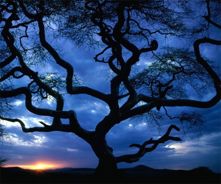 Eerie Tree - tree, large, dark, branches, clouds, sky, blue, twisted