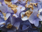 High Macro Purple Flowers