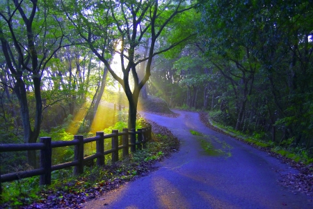 MORNING SUNLIGHT - fence, forest, sunlight, path, road