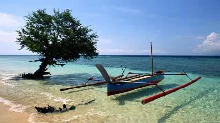 Beached Outrigger, Thailand - tree, water, boat, summer, sea