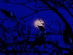 Peeps of the night..