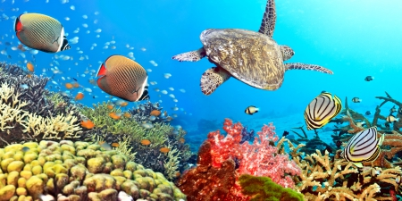 ♥Underwater♥ - underwater, reef, fishes, ocean, coral, turtle, tropical