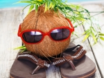 ♥Funny Coconut♥
