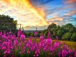 Wildflowers under fiery sky