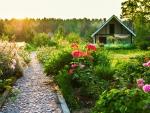 Summer garden at sunrise