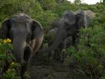 Elephant Familly 1