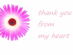 Pink daisy thank you