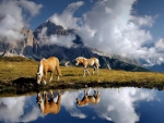 beautiful horses drinking from an alpine pond