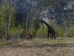 Dinos in Yosemite Park