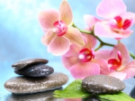 ♥Orchid Spa♥