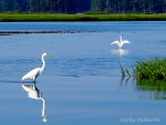 Egrets on the Water