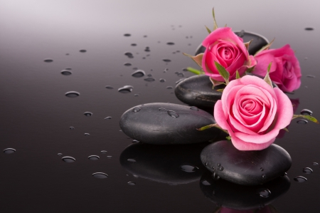 Pink Rose ♥ - lovely, rose, pebbles, beautiful, drops, pink rose, photography, stones, water drops, beauty, pink