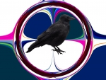 Black crow on a coloured background 2014