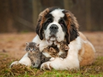 * Dog and kittens *