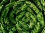Ferns from above