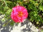 Flori de piatra 3