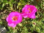 Flori de piatra 4