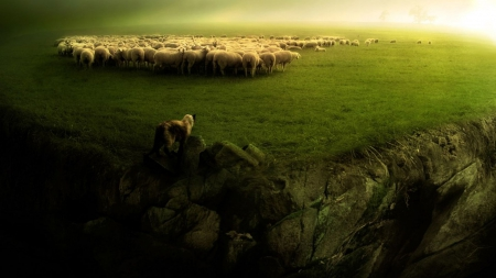 Grazing at the edge of the world - world, Grazing, sheep, edge
