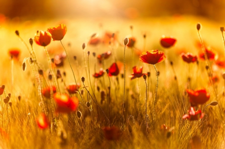 Golden Nature - Flowers & Nature Background Wallpapers on Desktop ...