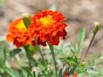 Bustling Summer Flower
