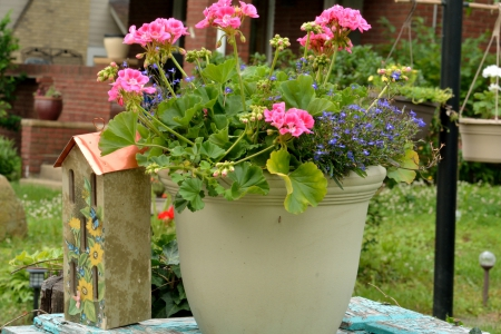 Pretty Flower Pot - flower pot, pink flowers, pretty flowers, Pretty Flower Pot