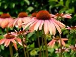 Amazing Flower Scene