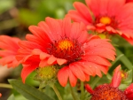 Flower Raindrop