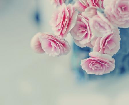 Pink pastel roses