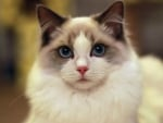 Beautiful Cat