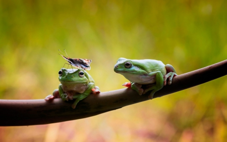 Don't move! - frog, butterfly, funny, branch, gren, animal