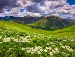 Field of flowers in the mountain