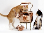 Cats and Copper Kettle