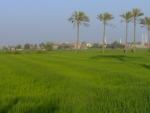 Fields in EGYPT