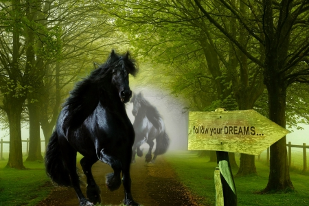 Escape from fear of obscurity and follow your dreams... - forest, two horses, black horse, black, follow your dreams, sign, misty, horses