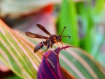Insect Macro Photography