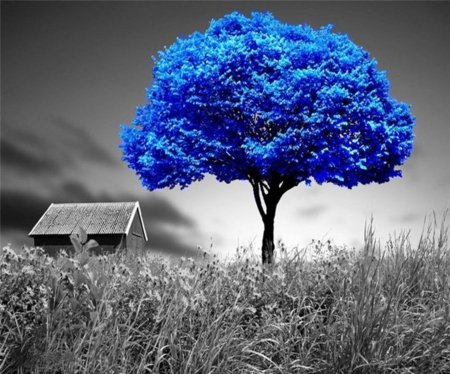 Surreal - house, blue and black, beautiful, country, blue tree, surreal, two colors, field