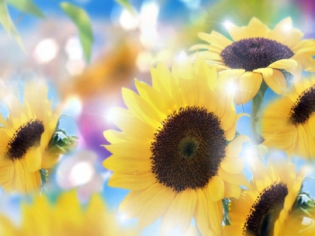 Bright Sunflowers - fantasy, bokeh, sunflowers, bright, flowers, nature, beautiful, soft