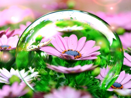 Life in a Bubble - daisies, fantasy, bubbles, flowers, nature, pink, daisy, field