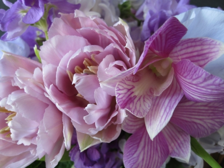 Loveliness in Pink & Purple - pretty, lovely, beautiful, close up, purple, macro, flowers, nature, pink